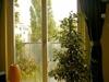 Blick Fenster