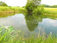 Teich/Biotop