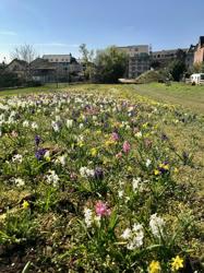 Blick über die Blumenfelder