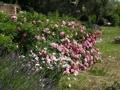 liebevoll angelegte, blühende Pflanzen
