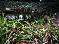 Teich im Vorgarten