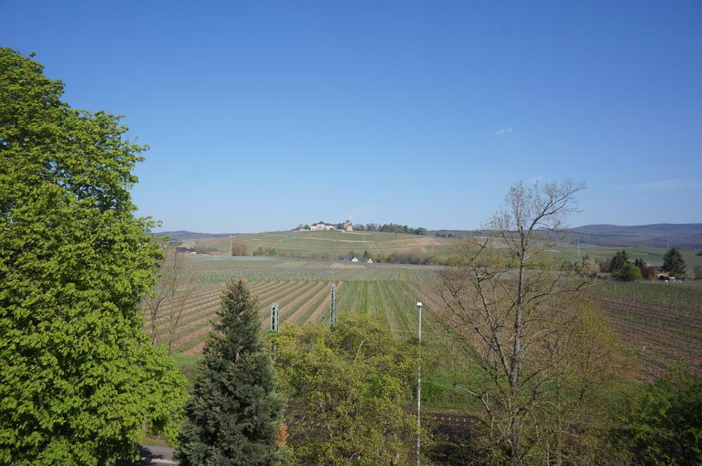 Blick auf Schloss Johannisberg