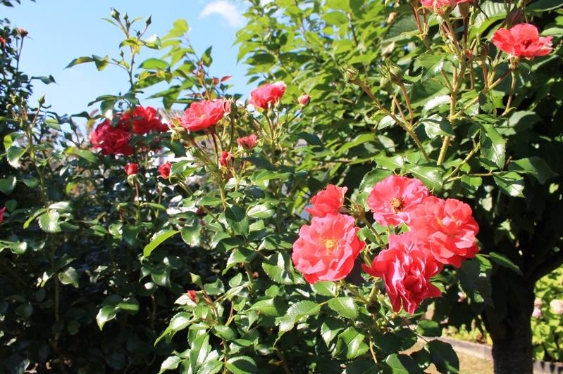 Duftender Blumengarten