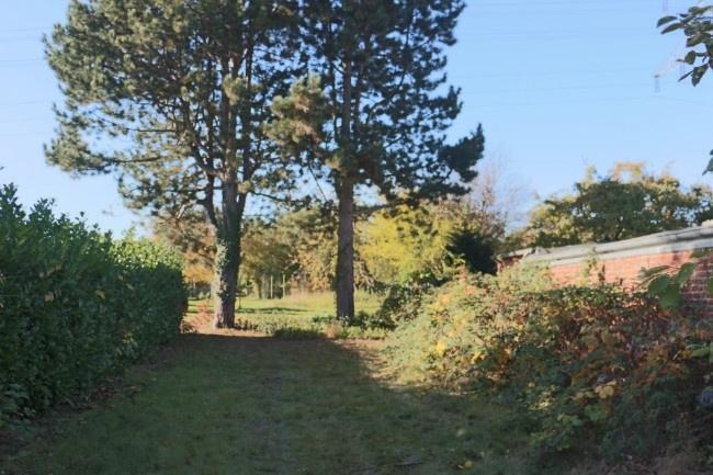 hintere Gartenbereich