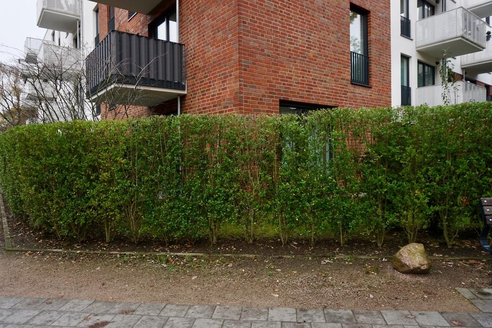 Garten geschützt durch eine Hecke
