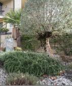 Eingang mit Garten
