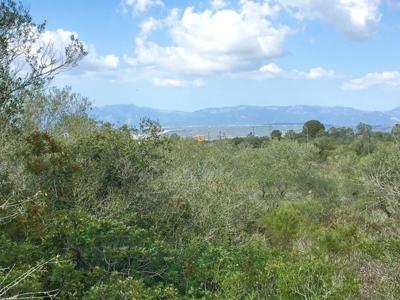 Baugrundstück Mallorca zu verkaufen