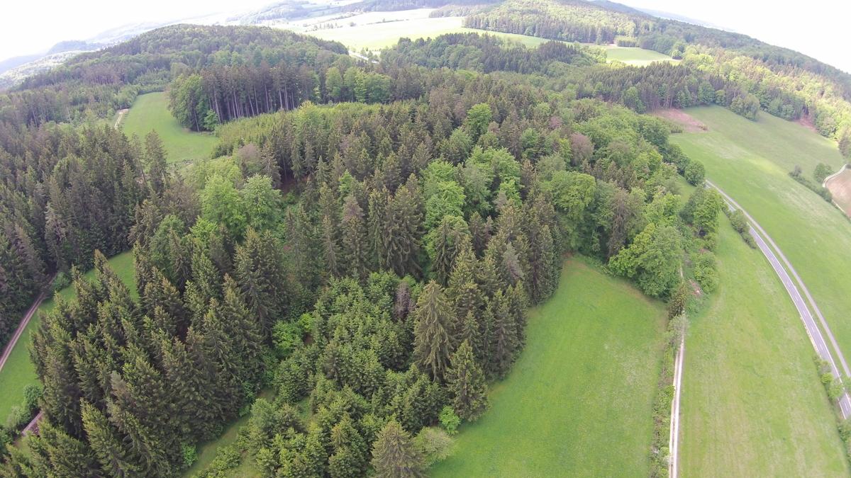 Waldfläche