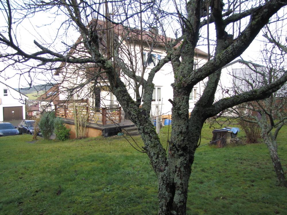 Garten mit Streuobstwiese