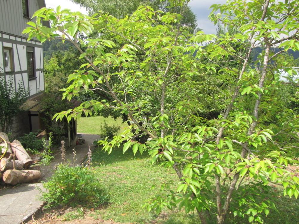 Der Garten seitlich vom Haus.png