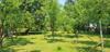 Ausschnitt Garten mit Obstbäumen