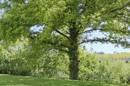 Garten mit Fernblick_NEU