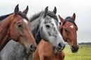 Viel Platz für Ihr Pferd