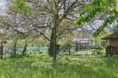 Mit großem Nussbaum