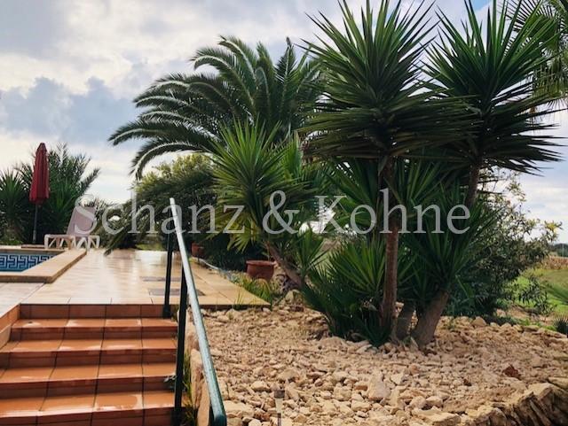 Palmen- und Holzgewächse