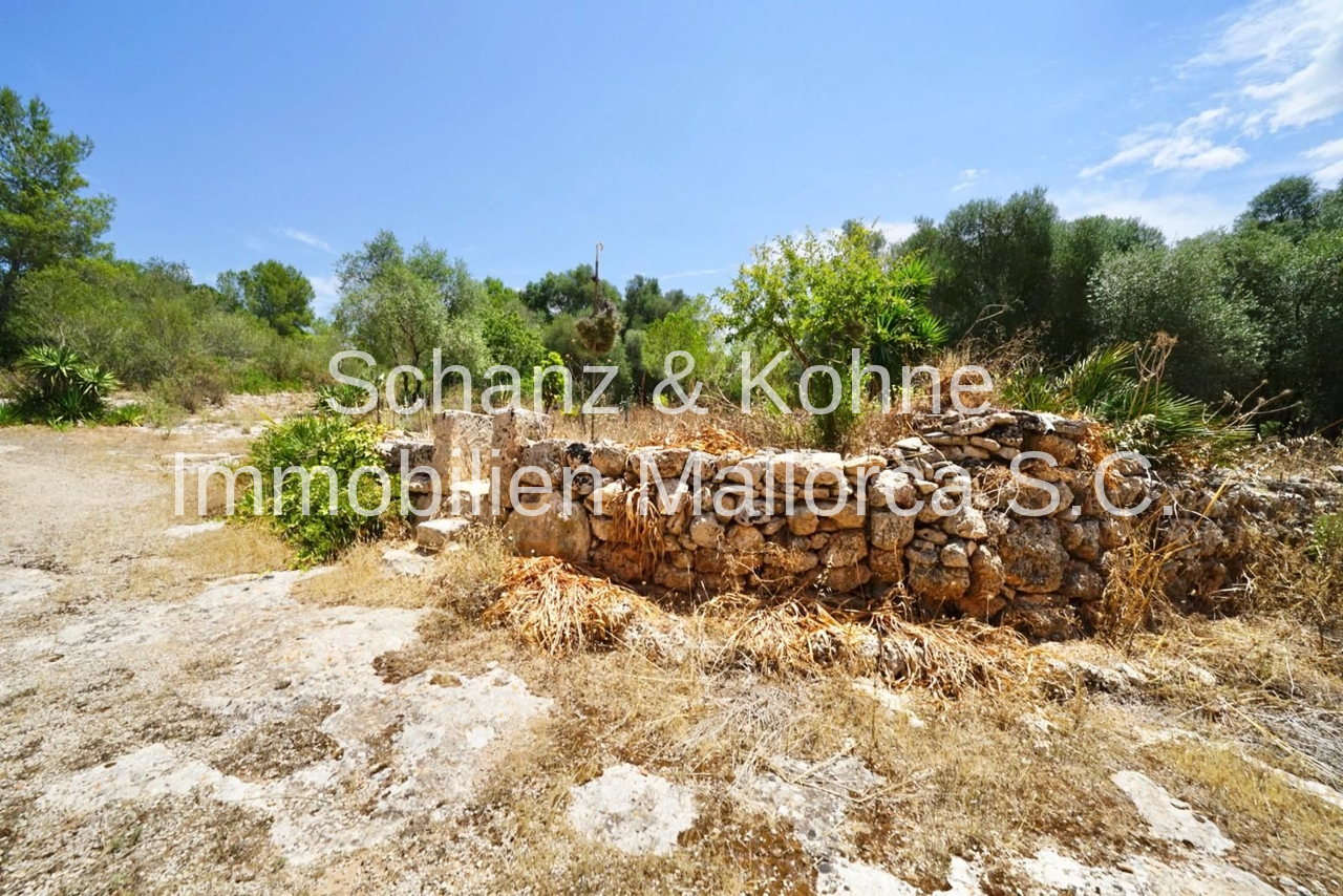 Viele alte Steinwälle