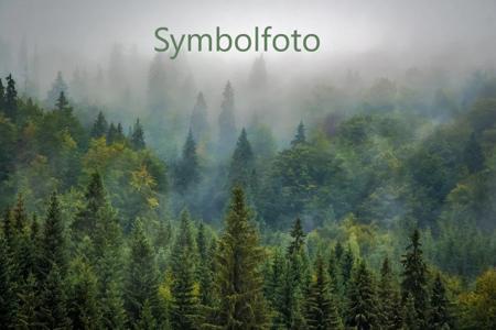 Wald-