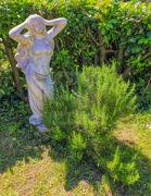 Statuemit Busch  im Garten