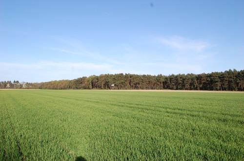 Ackerland