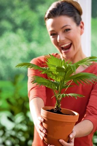 Pflanze gefällig