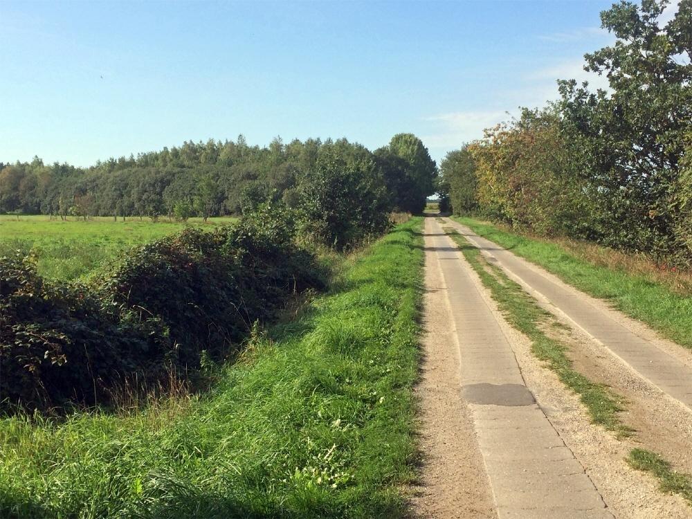 Straße am Weideland