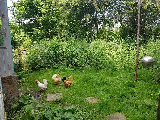 Hühnerhagen