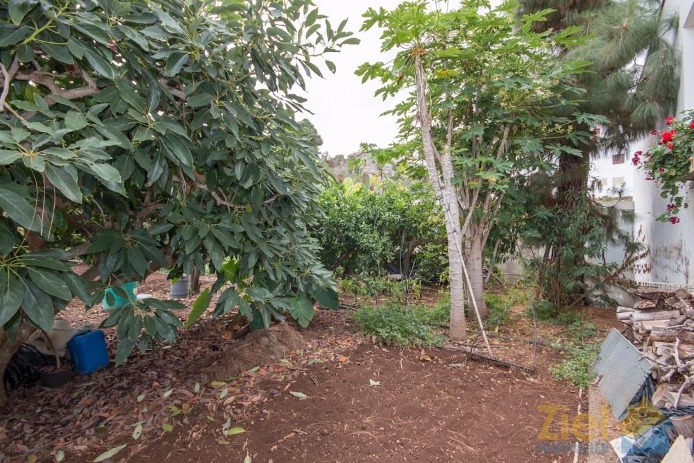 Von Avocados bis Kartoffel, es findet sich einiges im Garten