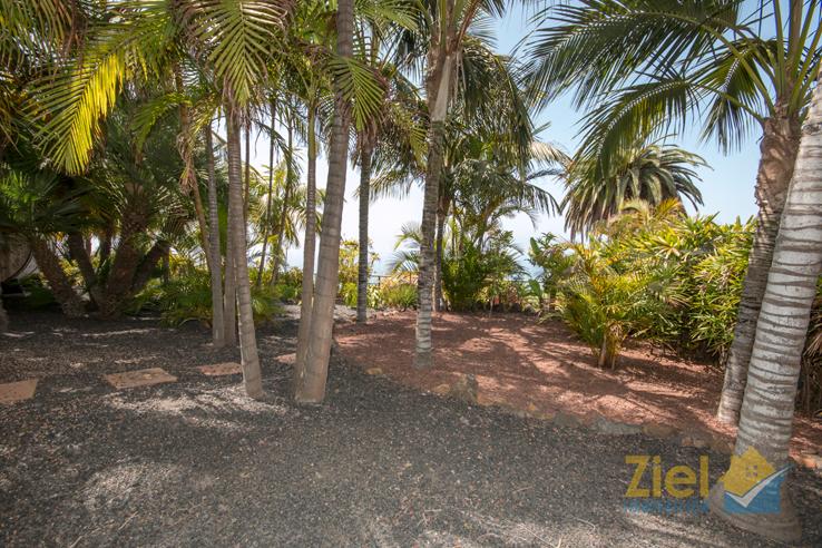 Blick durch die Palmen auf den Atlantik