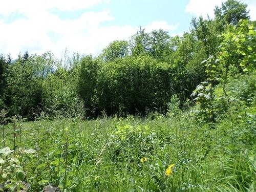 Wald südlich des Grundstücks