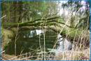 Teichbereich 2