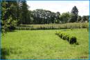 Garten mit Wiese