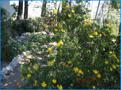 Gartenanlage 4