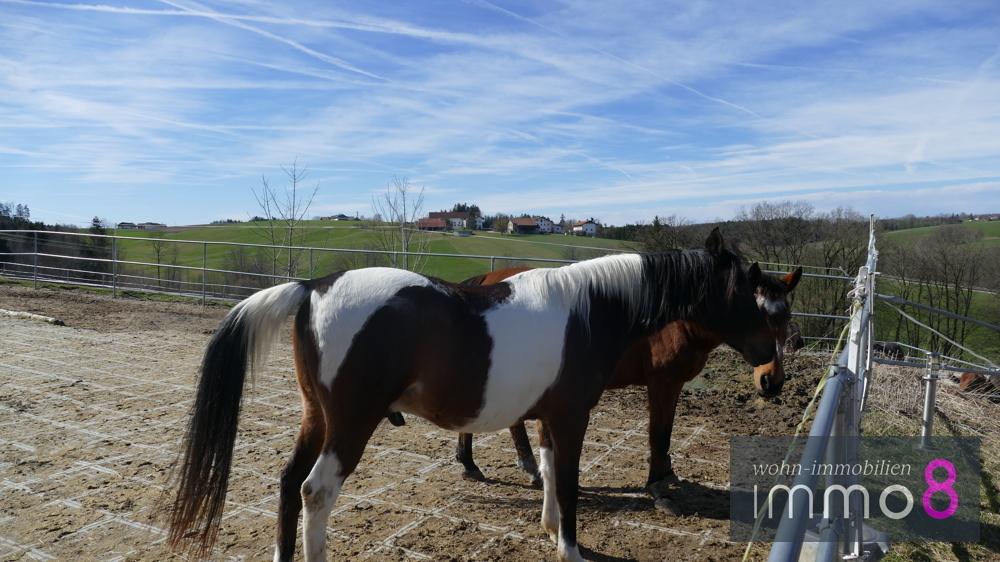 Glück und Freude mit Pferden empfinden