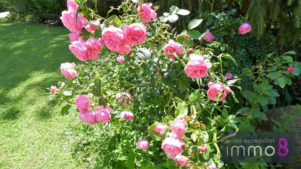 Rosenimpressionen eine Freude und sehr schön