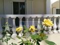 Außenansicht - Erdgeschoss Terrasse Esszimmer