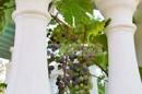 Aussenansicht - Terrasse Westseite mit Weinrebe