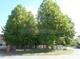Baumbestand auf dem Grundstück