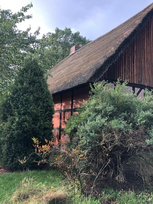 Garten Rückseite